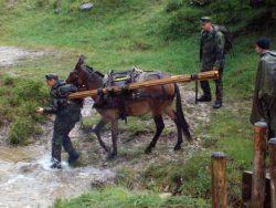 Muli-Einsatz zum Materialtransport in Kreuth
